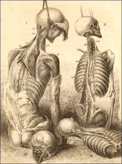 Sektionen – Anatomielehre